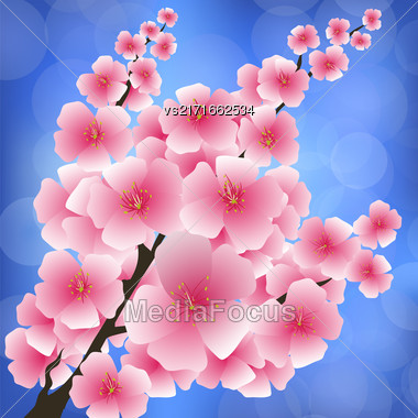 Spring Pink Flowers Isolated On Blurred Blue Background. Sakura Japan Cherry Tree. Blooming Branch Stock Photo