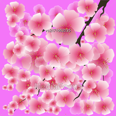 Spring Pink Flowers Isolated On Pink Background. Sakura Japan Cherry Tree. Blooming Pink Flowers. Branch Of Sakura Stock Photo