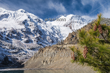 Spruce With Cones On The Mountains Background Stock Photo