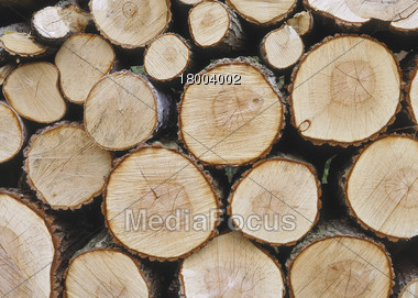Stacked Logs, Cross Sections Stock Photo
