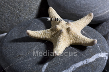 starfish over sea pebble still-life Stock Photo