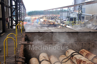 Steamed Pine Logs Ready For Production At A Plywood Factory Stock Photo