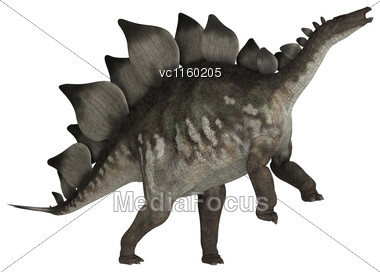 Stegosaurus Stenops Or Roofed Lizard, A Large Herbivore Dinosaur From The Late Jurassic Period Stock Photo