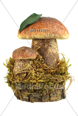 Still-life Of Two Brown Mushrooms Closeup Studio Photography Stock Photo