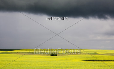 Storm Clouds Saskatchewan Canola Field Yellow Color Stock Photo