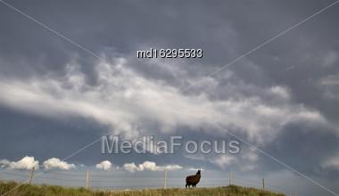 Storm Clouds Saskatchewan Prairie Scene Llama Stock Photo