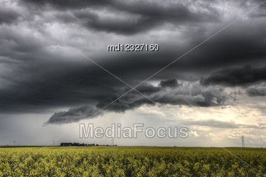 Storm Clouds Saskatchewan Yellow Bright Canola Field Stock Photo