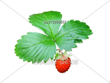 Strawberries Closeup With Green Leaves Stock Photo