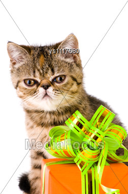 Striped Fluffy Kitten With Gift Stock Photo