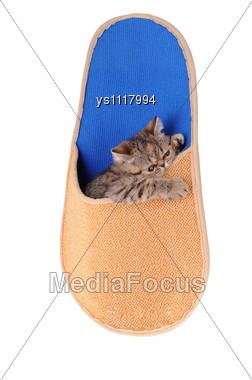Striped Fluffy Kitten In A Slipper Stock Photo