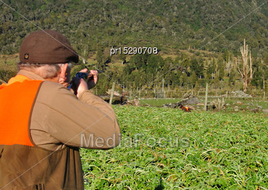 Successful Pheasant Hunter Hits His Bird On The West Coast, South Island, New Zealand Stock Photo
