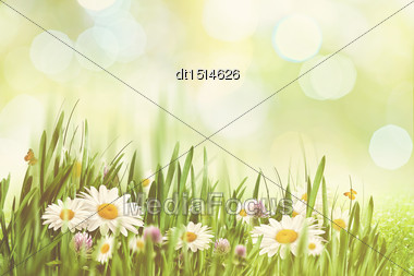 Summer Afternoon With Faded Colors, Abstract Natural Backgrounds Stock Photo
