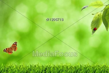 Summer Backgrounds With Blurry Bokeh, Grass And Butterfly Stock Photo