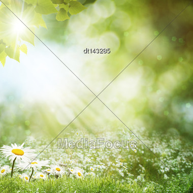 Summer Day On The Meadow, Environmental Backgrounds With Daisy Flowers Stock Photo