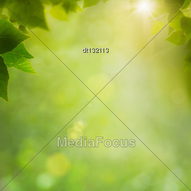 Summer In The Forest, Abstract Natural Backgrounds With Fresh Foliage And Bokeh Stock Photo