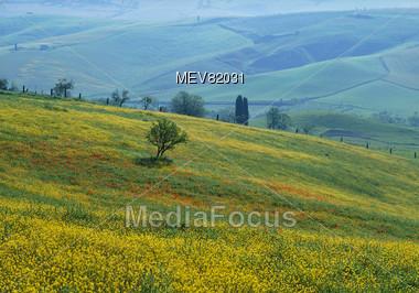 Summer Hills, Tuscany, Italy Stock Photo