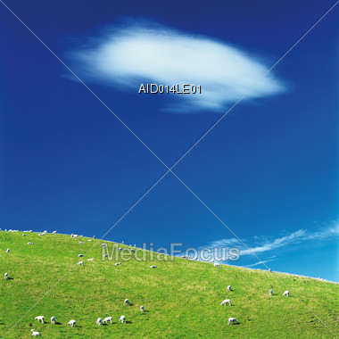 Summer Landscape with Grazing Sheep & Blue Sky Stock Photo