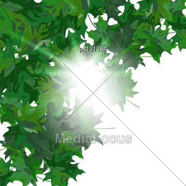 Summer Maple Leaves. EPS 10 Vector Illustration With Transparency And Meshes Stock Photo