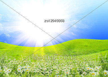 Summer Sunny Day And Field Of Flowers Stock Photo