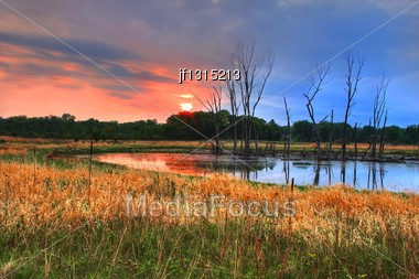 Sun Rising Over A Nature Woodlands In High Dynamic Range Stock Photo