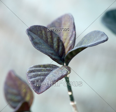 Sunny Day, Separately Worth Bushes With 4 Leaf On Tops Stock Photo