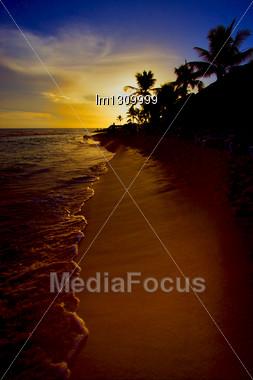 Sunrise River Palm Rock Stone Branch Hill Lagoon And Coastline Republica Dominicana Stock Photo