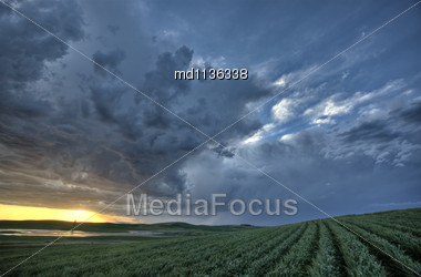 Sunset Nad Durum Wheat Crop Storm Clouds Stock Photo