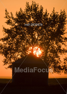 Sunset Saskatchewan Canada Granary Agriculture Sun Tree Stock Photo