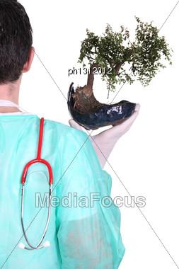 Surgeon With A Bonsai Tree Stock Photo