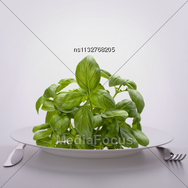 Sweet Basil Leaves On Plate. Raw Food Diet Concept Stock Photo