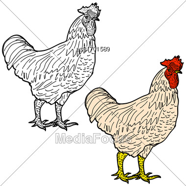 Symbol Of New Year 2017 And Christmas Red Rooster. Rooster Sketch Isolated Icon. Vector Illustration Stock Photo
