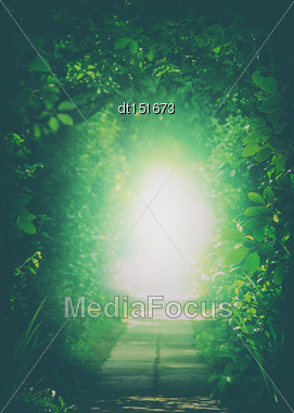 Teleport To Another Universe. Tunnel In The Forest. Natural Backgrounds Stock Photo