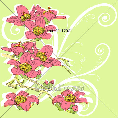 Tender Twig Blossoming Orchids On A Light Background Stock Photo