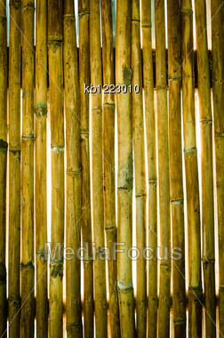 Texture Of Old Wall Bamboo Stock Photo