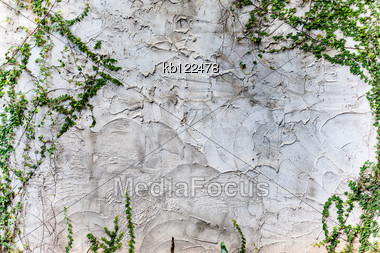 Texture Rough Of Cement Wall And Plant On Wall Stock Photo