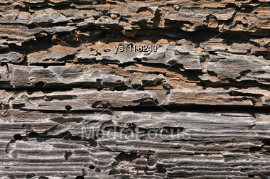 Textured Wood Of Very Old Tree Stock Photo