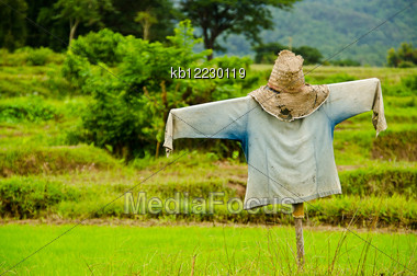 Thai Scarecrow In Rice Green Field Stock Photo
