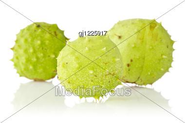 Three Green Chestnuts Stock Photo