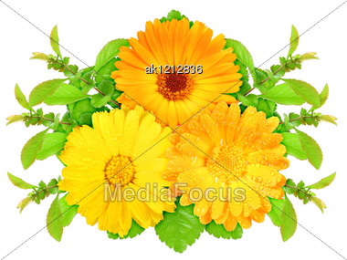 Three Orange Flowers With Green Leaf Nature Art Ornament Template For Your Design Close-up Studio Photography Stock Photo