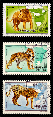 Three Stamps In The Set With The Lion, Leopard And Cheetah Isolated On A Black Background Stock Photo