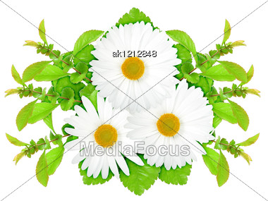 Three White Flowers With Green Leaf Nature Art Ornament Template For Your Design Close-up Studio Photography Stock Photo