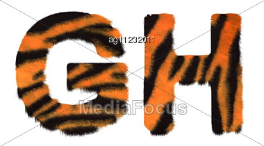 Tiger Fell G And H Letters Stock Photo