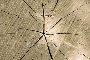 Timber Cut With Cracks And Annual Rings Texture Background Stock Photo