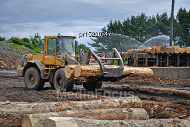 Timber Loader Places Pinus Radiata Logs At The Feed-in Area Of A Sawmill Stock Photo