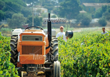 Tractor and Men Harvesting Stock Photo