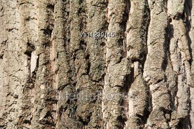 Tree Bark Texture. Background. Close Up Stock Photo
