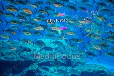 Tropical Fish On A Coral Reef In Dubai Aquarium Stock Photo
