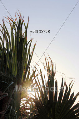Tropical Palm Tree At Sun Light Stock Photo