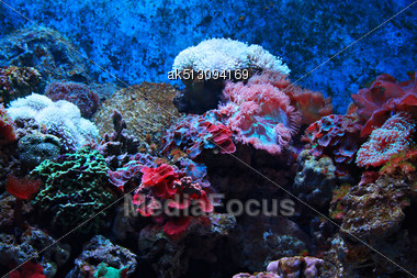Tropical Seaweed And Corals, Thailand Stock Photo