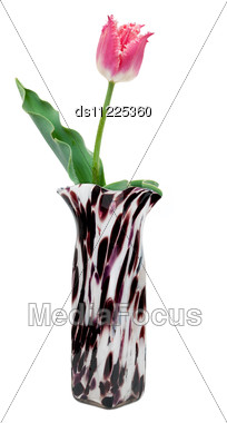 Tulip In A Vase Stock Photo